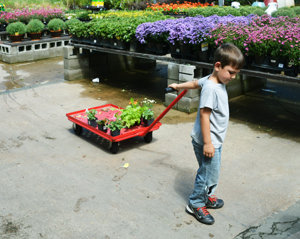 Buying flowers at Lowes
